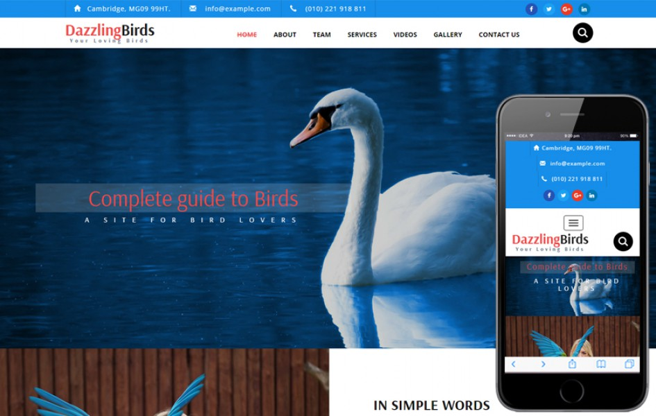 Dazzling Birds an Animal Category Bootstrap Responsive Web Template